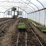 Karme Choling's main greenhouse