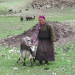 A Yak's Tale of Liberation