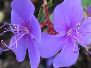 Purple Flower Reflection. Photo courtesy of Joey Johannsen.
