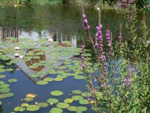 Pond at Karme Choling. Photo by Charlene Leung