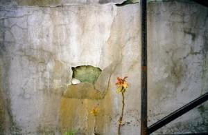 Flower, photo courtesy of Maxine Sidran
