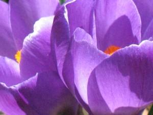 Lavender Garden by Joey Johannsen