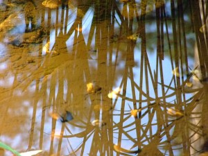 Pond Memories, photo courtesy of Margaret Clark