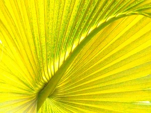 """Palm Frond"" - Miksang photo by Margaret Clark"