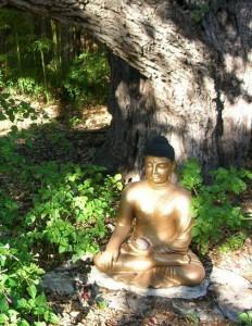 ASC_buddha_tree