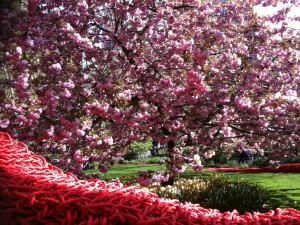 Park in NY in bloom, photo by Carolyn Gimian