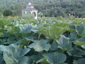Karme Choling garden