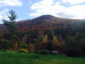 Vermont foliage, by Sarah Lipton