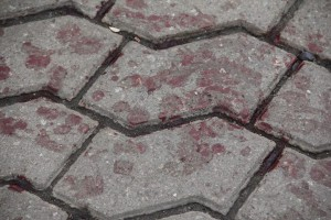 Ukrainian blood on the square, photo by Temo