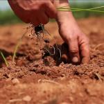 Prince Edward Island goes Organic
