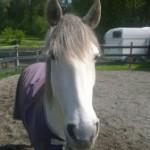 Pre-Miksang horse