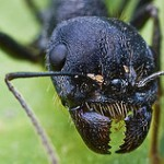 Killing Ants – Exploring Compassion