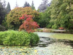 VanDusen Garden pond