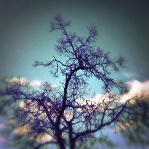 tree_branch_sky_cloud_geist