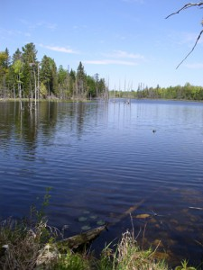 The property has 15 beaver ponds that provide habitat for a wide array of wild creatures