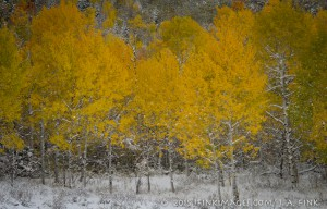 aspens snow-2-2