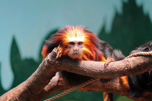 monkey-913427__340