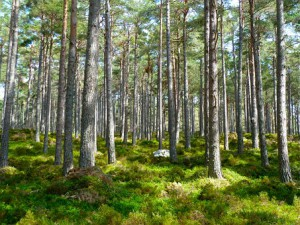 forest-272595__340