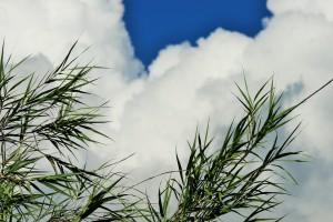 reeds-315716_960_720