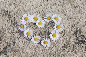 daisy-1307646__340