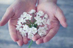 flower-1283259__340