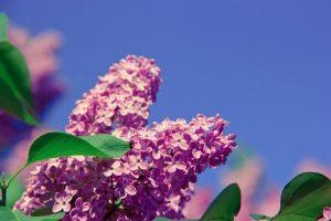 flower-1349238__340