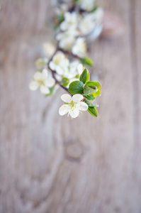 flowers-1378101__340