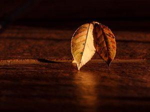leaf-409258__340
