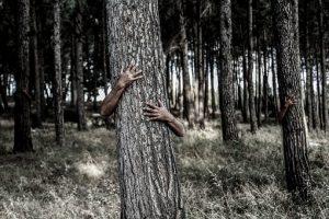 tree-1379426__340