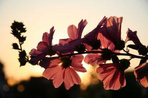 flower-646127__340