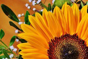 bouquet-1516630__340
