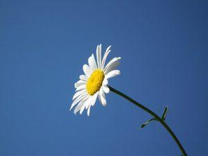 flower-193452__340
