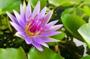 flowers-1593269__340