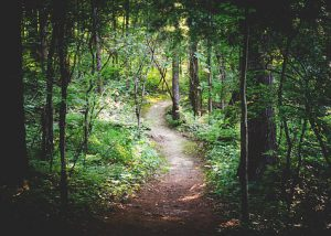 forest-path-1081805__340