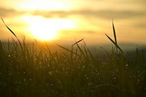 grass-546794__340