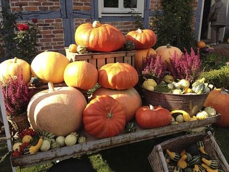 pumpkin-187885__340