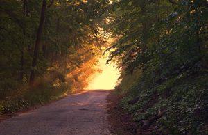 sunlight-166733__340