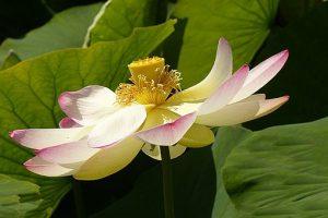 flower-1717709__340