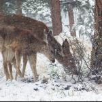 Deer Park, Part One