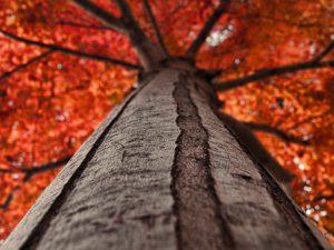 autumn-1589644__340