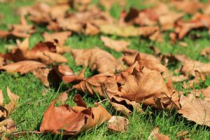 autumn-473059__340