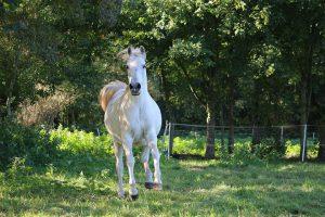 horse-994153__480