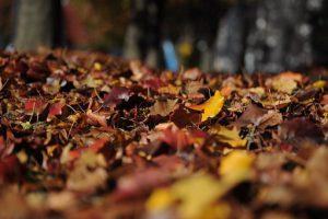 leaves-101329__340