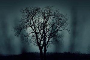 tree-407256__480