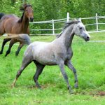 Right Livelihood Arises from Raising Equestrian Windhorse